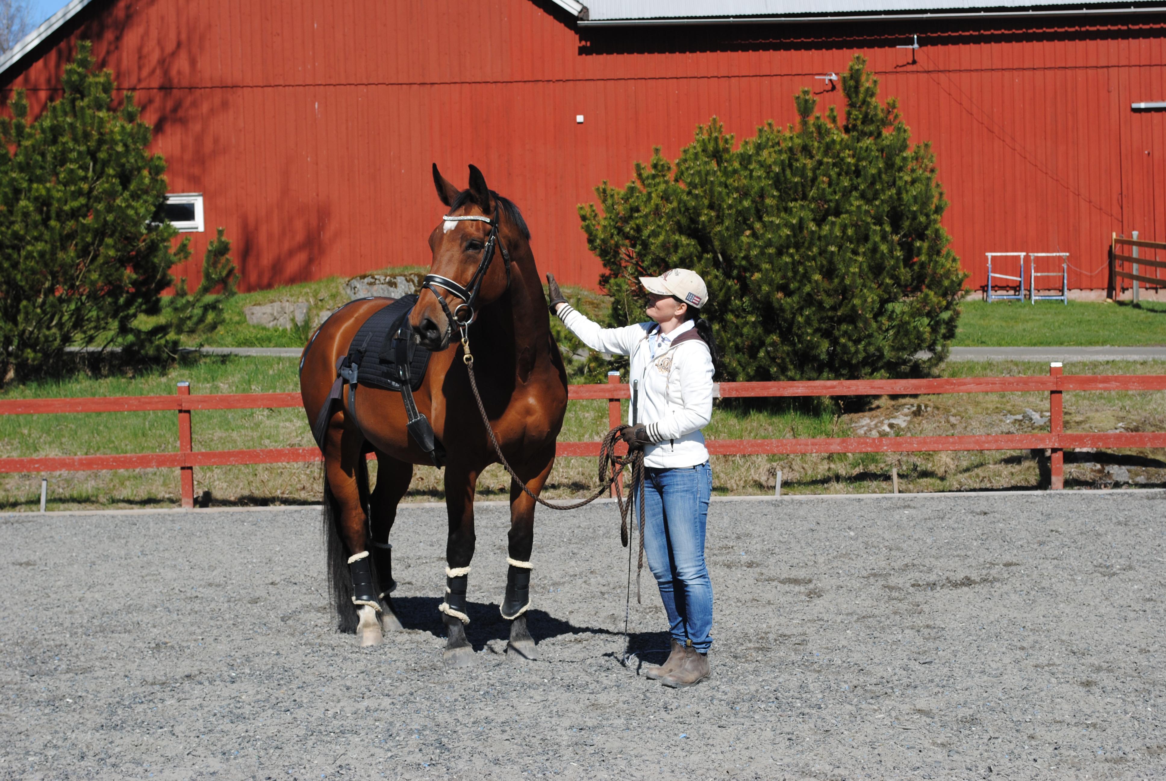 Svensk Hästrehab – vad vi kan hjälpa dig med