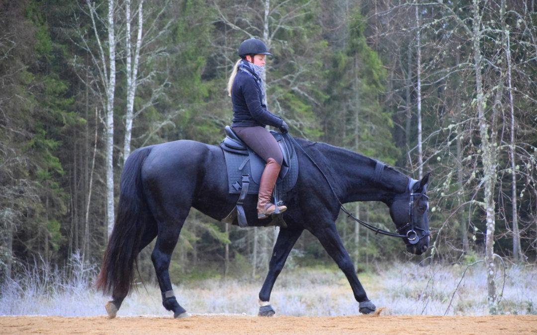 Vill du stärka hästens länd?