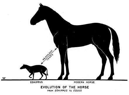 När vi stökar med evolutionen