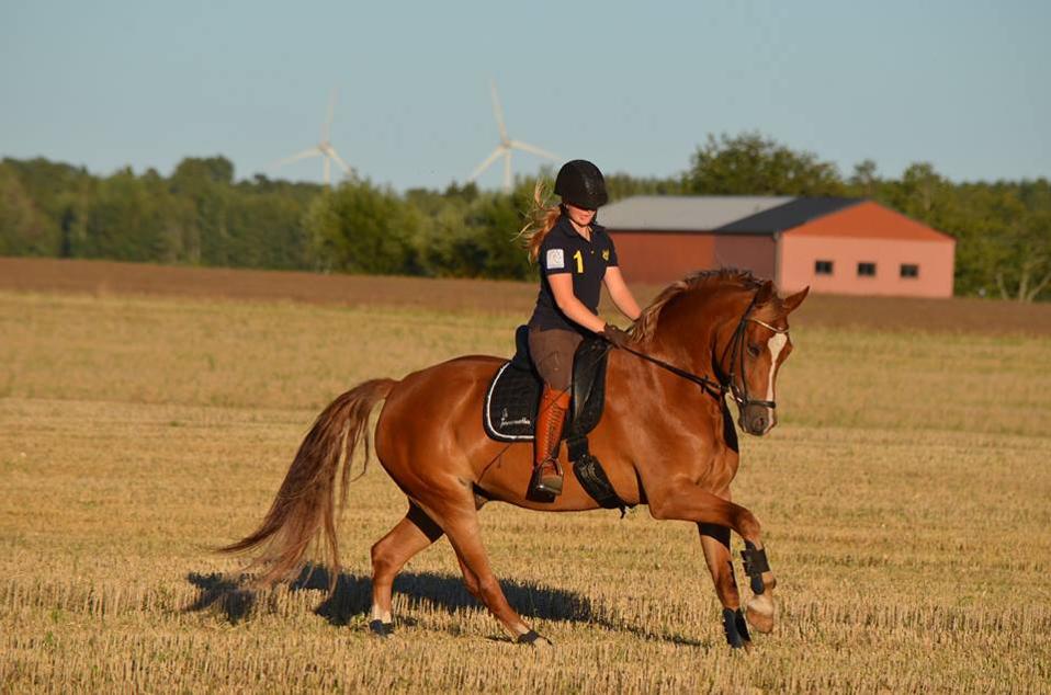 Går hästen i fri form, en form eller i form?