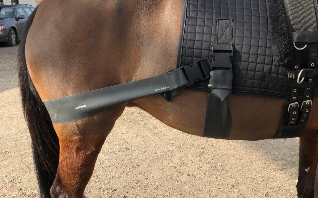 Equiband för bakknän – stabilisering/rehab/power