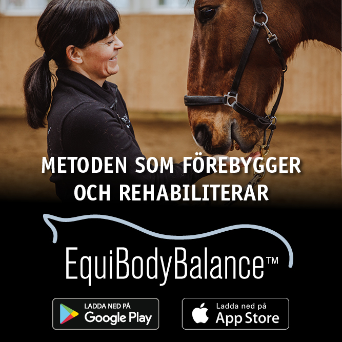 Equibodybalance – appen, vad ingår?