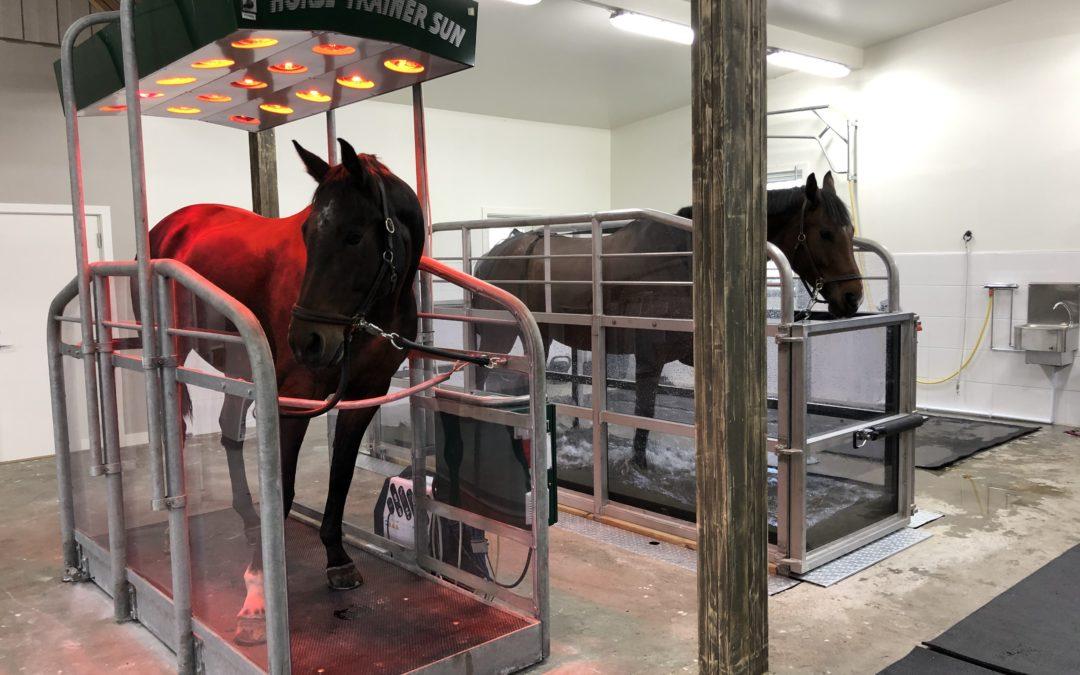Vattenträning – för vilka hästar?