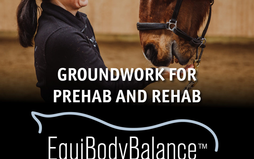 Equibodybalance™ – like yoga for your horse