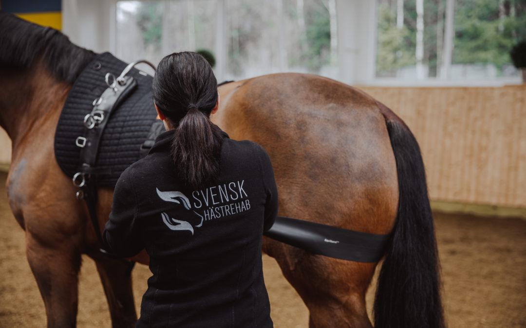 Behöver din häst rehab för rygg, bakknä eller halskotpelare?